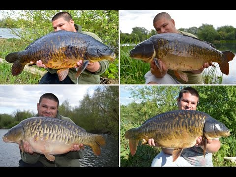 Carp fishing around weed