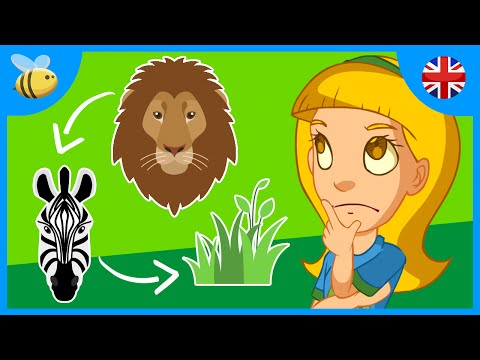 What is the Food Chain? | Kids Videos