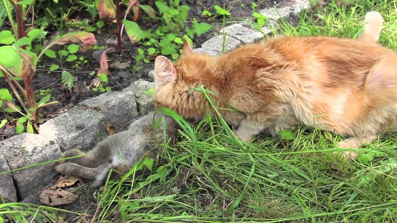 How To Stop Cat Hunting Burds