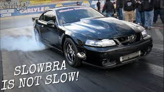 SLOWBRA Turbo Cobra Is Not SLOW! Wonder Racing Terminator