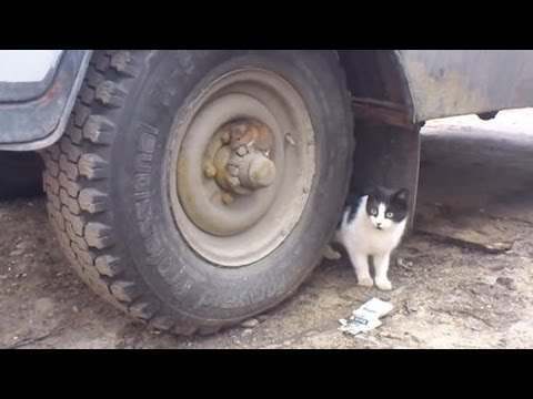 Tom and Jerry Real Life