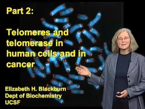 Elizabeth Blackburn (UCSF) Part 2: Telomeres And Telomerase In Human Stem Cells And In Cancer