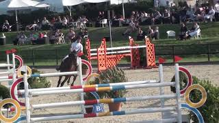 Callisto, Gelding, *2008, Show Jumping, Confidence Giver