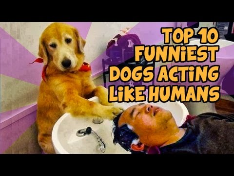 TOP 10 FUNNIEST DOGS WHO ACT LIKE HUMANS