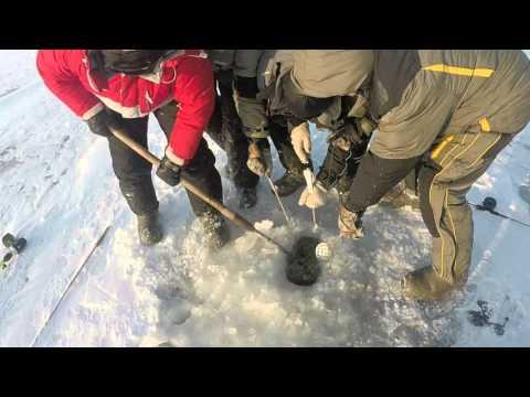 Судак 11 кг 300 грамм, Рыбинка, 5 января 2016 - длина судака 103 сантиметра