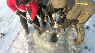 Судак 11 кг 300 грам, Рыбинка, 5 січня 2016 - довжина судака 103 сантиметри