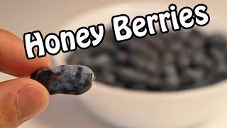 HONEY BERRY REVIEW (Haskap) - Weird Fruit Explorer Ep. 392