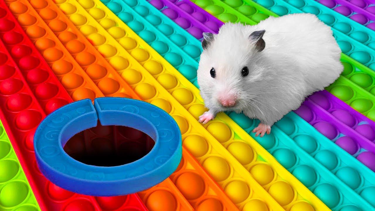 Hamster POP IT Maze [OBSTACLE COURSE] - скачать с YouTube бесплатно