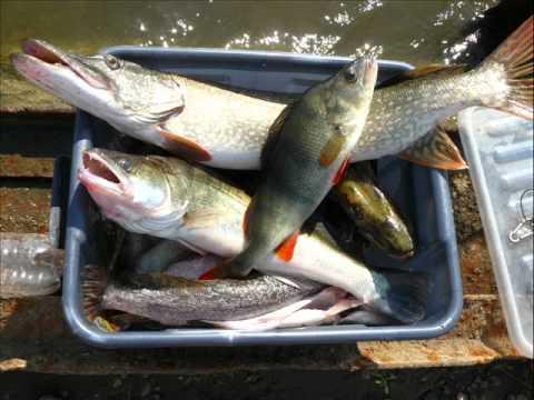 Рыбалка в березово хмао