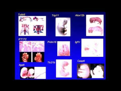 MPG Primer: Mouse Genetics (2012)
