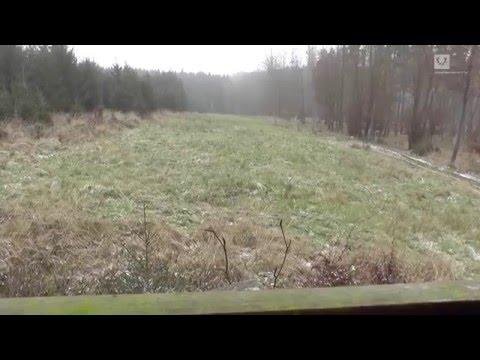 Stöberjagd Auf Sauen/ Wild Boar Driven Hunt/ Sanglier En Battue