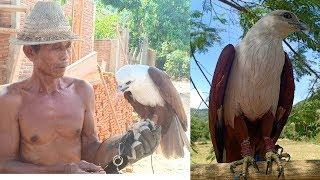 Pak tua dan burung Elang Bondolnya