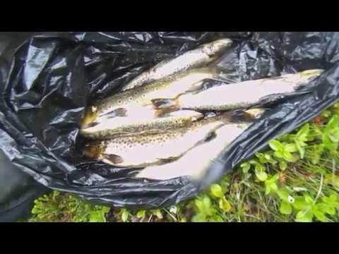 Озерная рыбалка Форель