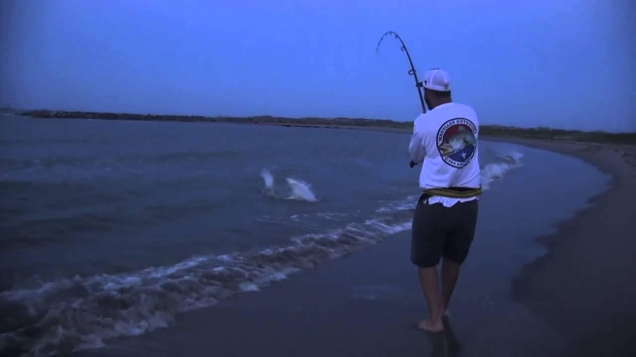 shark fishing spinfishers back to blacktip sharks shark fishing spinfishers back to blacktip sharks