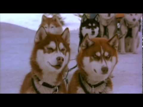 Снежные псы.(момент с соломой)