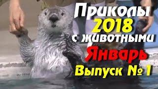 смешные видео приколы с животными 2017-2018, новые ютуб приколы бесплатно,