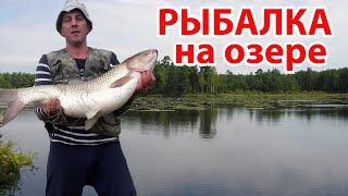 Рыбалка на озере Карповая ловля рыбалка на карася Ловля крупной рыбы
