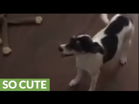 Dogs introduced to newborn baby family addition