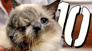 10 NAJDZIWNIEJSZYCH zwierząt domowych [TOPOWA DYCHA]