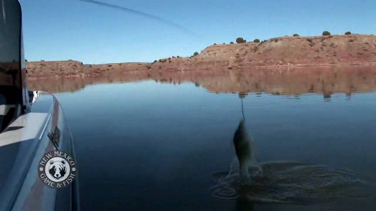 Winter bass fishing at ute lake youtube for New mexico fishing license