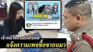 กรมบังคับคดีแจ้งความเพจซื้อขายแมว   ข่าวช่องวัน   one31