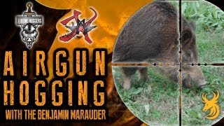 Extreme Airgun Hunting: Hogging with the Benjamin Marauder