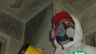 Mold Remediation New York By Apex Mold Specialists