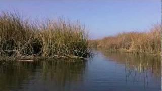 Wetlands Boat Trip on the California Delta