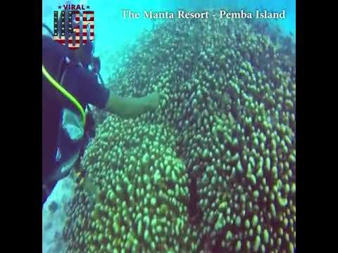 The Manta Resort s Underwater Room, Pemba Island, Zanzibar