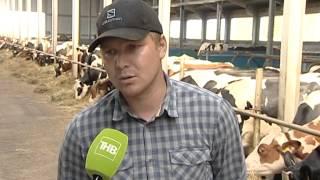 Коровы из Голландии пополнили поголовье фермы в с. Киндер