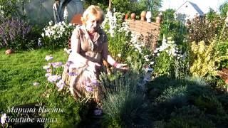 видео Мискантус: посадка и уход в открытом грунте, выращивание, применение в ландшафтном дизайне