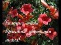 цветы в китае фото и их названия