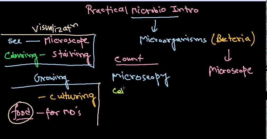 Microbiology practical introduction - lab, culture media, culture techniques