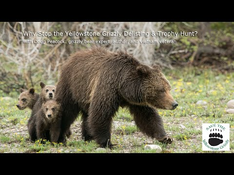 Why Stop the Delisting & Trophy Hunt of the Yellowstone Grizzly? - Doug Peacock