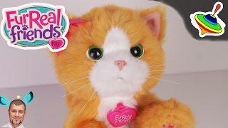 Игривый котенок Дейзи Furreal Friends Daisy