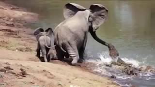 Животные спасают друг друга. Звери помогают друг другу