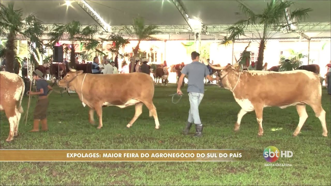 Expolages  começa a maior feira de agronegócio do país - Jonas  Augusto Antonio Claudino 3bc4441419c