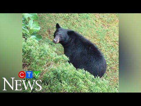 North Vancouver residents upset neighbourhood bear killed