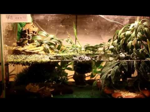 How To Setup My Fire Belly Newt Tank! ~update return
