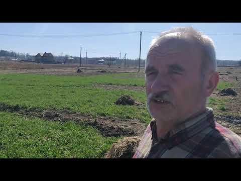 Польза сидератов , удобрение почвы .