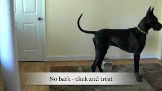 """manners Minder"" Or ""treat And Train"" Help Stop Barking At The Doorbell"