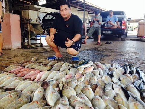 ตกปลา ทะเลตราด กับเรือ เนตรวารี  By Roj Fishing