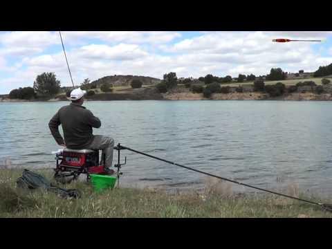 Pesca de carpas para principiantes