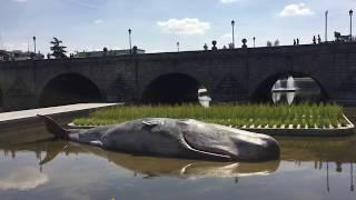 Ballena en el río Manzanares de Madrid / Whale in Madrid