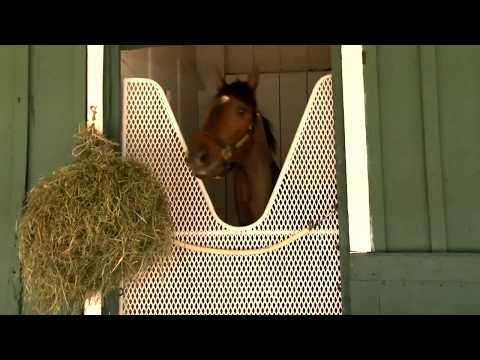 Lukas likes chances with Preakness 2018 longshots