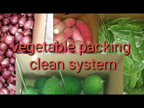 Export vegetable packing and processing Parul onion clean vegetable export packing watch video
