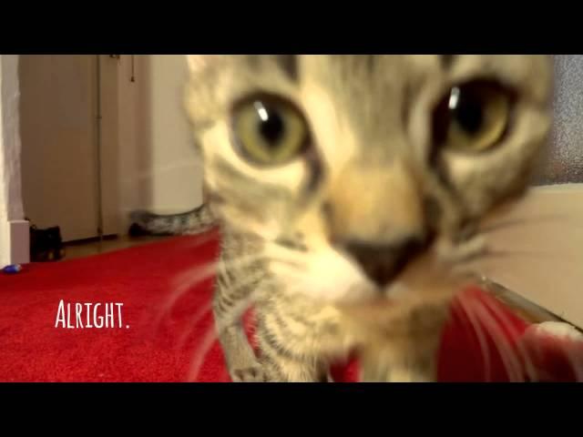 Kitten chasing mice: Jonasek the hunter