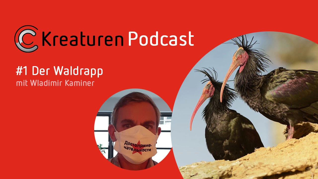 Im KreaturenPodcast stellt Wladimir Kaminer den Waldrapp vor.