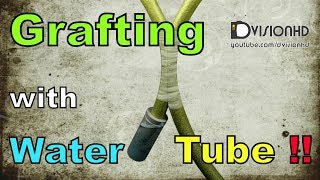 Grafting-Approach grafting with water tube animation