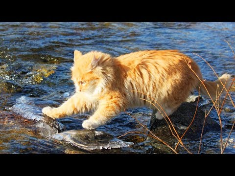 Cute Cats and Fish 😻🐠  Funny Cats Playing With Fish (Part 1) [Funny Pets]